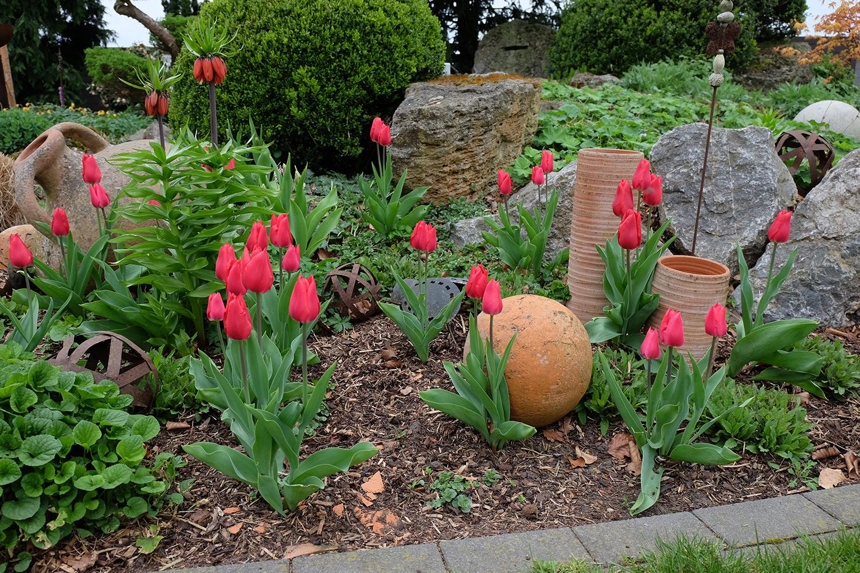 Tulpenbepflanzung